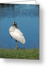 Posing Wood Stork Greeting Card
