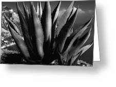 Positano Agave Bw Greeting Card