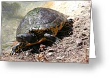 Possible Cooter Turtle Greeting Card