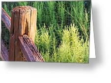 Post And Rail At Sunset Greeting Card