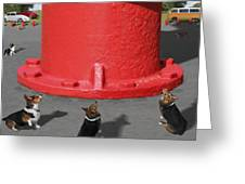 Postcards From Otis - The Hydrant Greeting Card