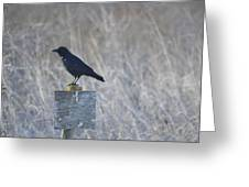Posted Crow Greeting Card