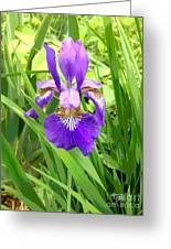 Posterized Japanese Iris Greeting Card