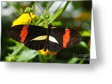 Postman Butterfly 2 Greeting Card