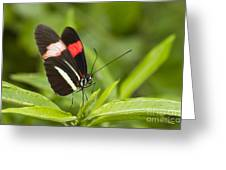 Postman Butterfly On Green Greeting Card
