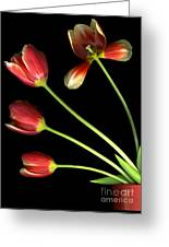 Pot Of Tulips Greeting Card