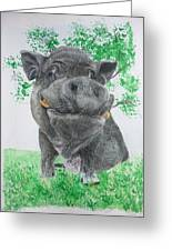 Potbellied Pig Pet Portraits Watercolor Memorial Made To Order 5x7 Inch Greeting Card