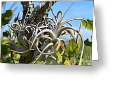 Potbelly Airplant Greeting Card