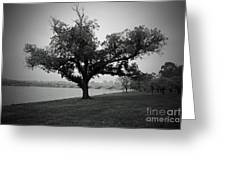 Potomac Tree Greeting Card
