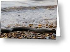 Potomac Water Snake Greeting Card