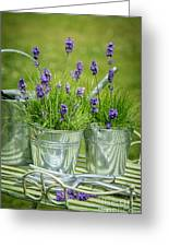 Pots Of Lavender Greeting Card