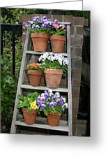 Potted Flower On Ladder Greeting Card