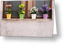 Potted Flowers 01 Greeting Card by Rick Piper Photography