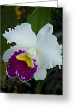 Potted Orchid Greeting Card