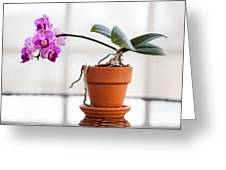 Potted Pink Orchid Greeting Card
