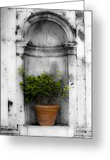 Potted Plant At Villa D'este Near Rome Italy Greeting Card