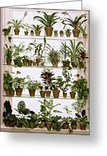 Potted Plants On Shelves Greeting Card