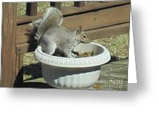 Potted Squirrel Greeting Card