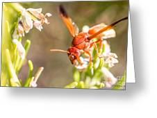 Potter Wasp Female Greeting Card