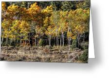 Poudre Canyon Shack Greeting Card