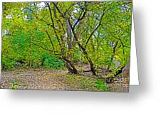Poudre Trees-2 Greeting Card by Baywest Imaging