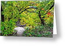 Poudre Walk Greeting Card by Baywest Imaging