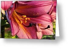Powdered Pollen  Greeting Card