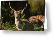 Powderham Deer  Greeting Card