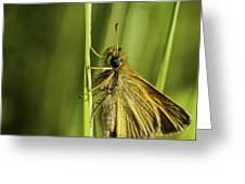 Poweshiek Skipperling Greeting Card