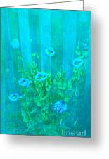 Papaver Orientale 4 Greeting Card