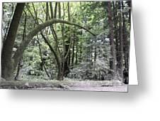 pr 136 - Bowed Tree Greeting Card