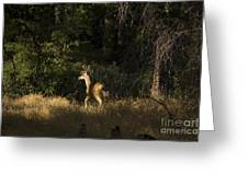 pr 140 -Deer in the Grass Greeting Card