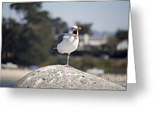 pr 175 - The Tired Seagull Greeting Card