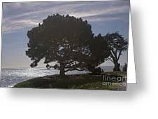pr 216- Black Oak Greeting Card