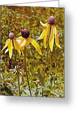 Prairie Coneflowers In Pipestone National Monument-minnesota  Greeting Card