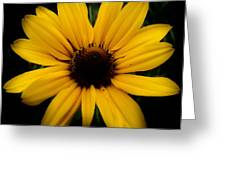 Prairie Coreopsis Greeting Card