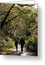 Prairie Creek Redwood State Park With Sun Breaking Through Trees Greeting Card