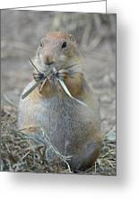 Prairie Dog Food Greeting Card