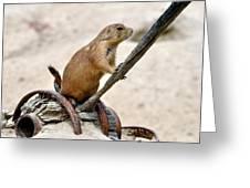Prairie Dog Pose Greeting Card