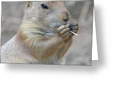 Prairie Dog Treat Greeting Card