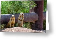 Prairie Dogs In Bryce Greeting Card