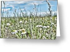 Prairie Flowers And Grasses Greeting Card