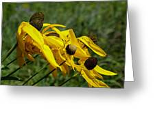 Prairie Flowers In Wind Greeting Card
