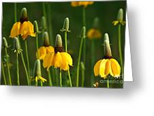 Prairie Flowers Greeting Card
