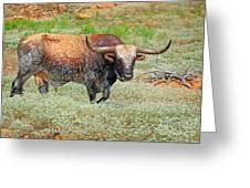 Prairie Longhorn Greeting Card