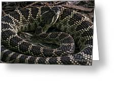 Prairie Rattlesnake Greeting Card