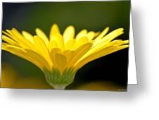 Praising Petals Greeting Card