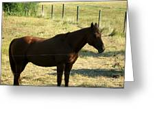 Prarie Stallion In The Shade Greeting Card by Barbara Griffin