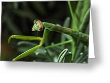 Praying Mantis 2 Greeting Card