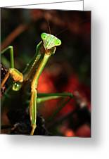 Praying Mantis Portrait Greeting Card